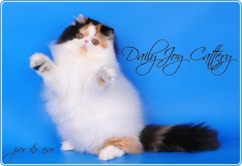 Daily Joy Cattery