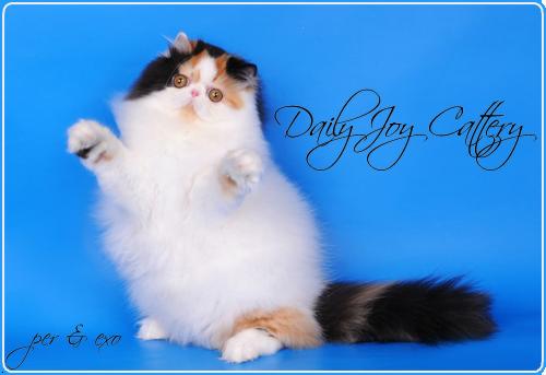 Daily Joy Cattery
